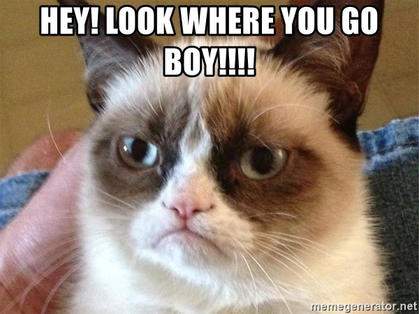 Angry Cat Meme - HEY! LOOK WHERE YOU GO BOY!!!!