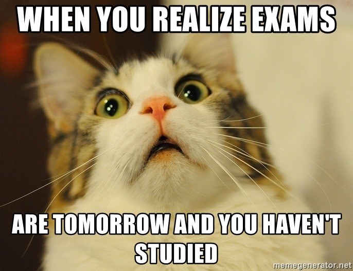 panic cat face - when you realize exams  are tomorrow and you haven't studied
