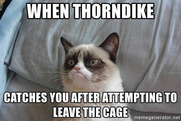 Grumpy cat good - when Thorndike catches you after attempting to leave the cage