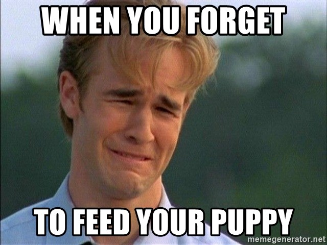 Dawson Crying - When you forget  To feed your puppy