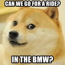 dogeee - Can we go for a ride? In the BMW?