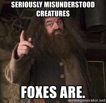 Hagrid - Seriously misunderstood creatures Foxes are.