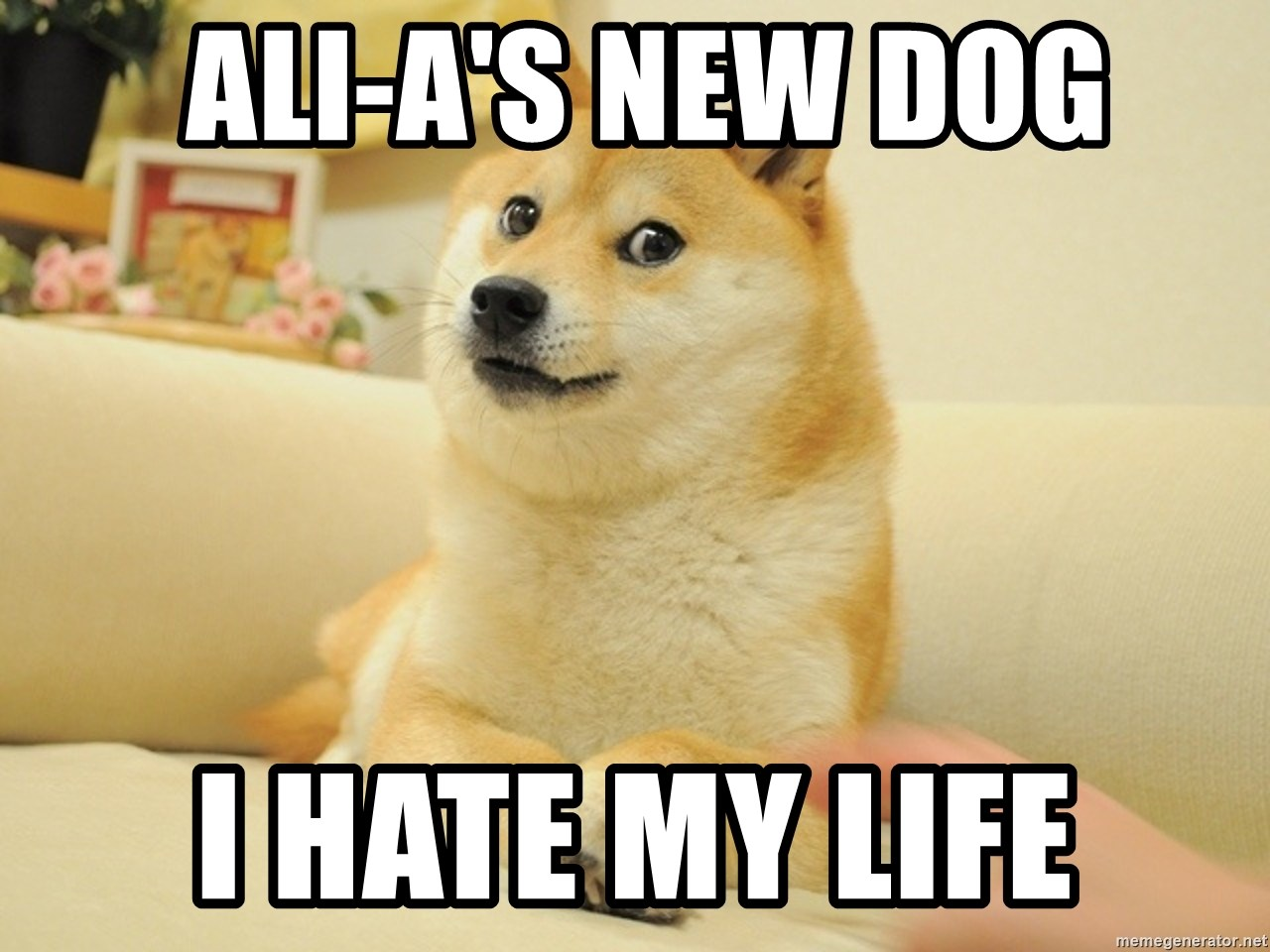 so doge - Ali-A's new dog I hate my life