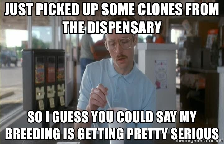 Things are getting pretty Serious (Napoleon Dynamite) - Just picked up some clones from the dispensary  So I guess you could say my breeding is getting pretty serious