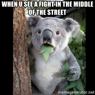 Koala can't believe it - When u see a fight in the middle of the street