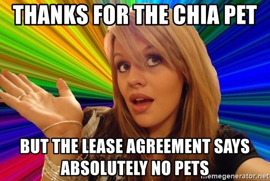 Dumb Blonde - thanks for the Chia Pet but the lease agreement says absolutely No Pets