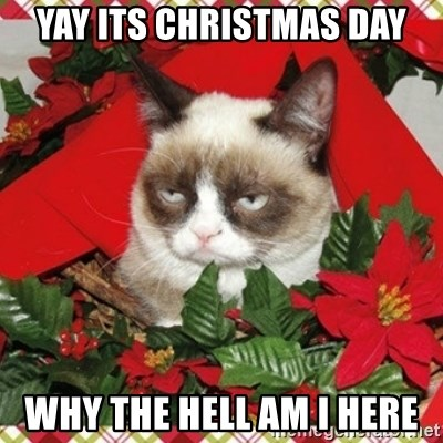 Grumpy Christmas Cat - Yay its Christmas day why the hell am i here