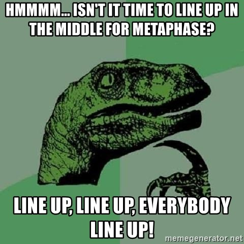 Philosoraptor - Hmmmm... isn't it time to line up in the middle for metaphase? LINE UP, LINE UP, EVERYBODY LINE UP!