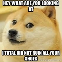 dogeee - hey what are you looking at I total did not ruin all your shoes