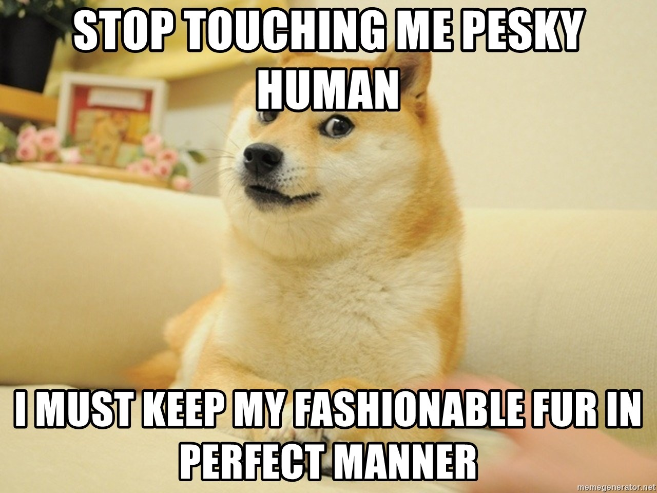 so doge - stop touching me pesky human i must keep my fashionable fur in perfect manner
