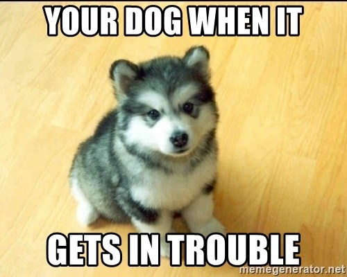 Baby Courage Wolf - Your Dog When It Gets In Trouble