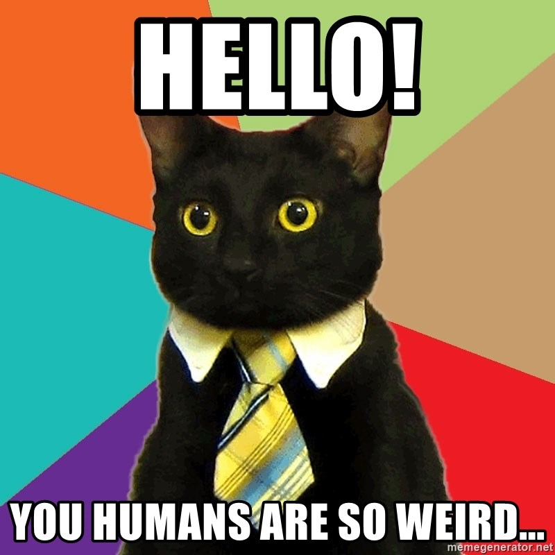 Business Cat - HELLO! YOU HUMANS ARE SO WEIRD...