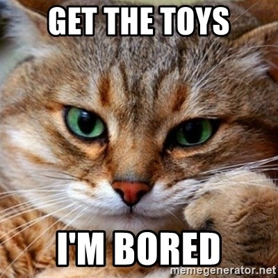 bored cat - get the toys I'm bored