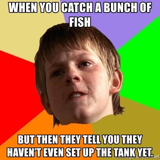 Angry School Boy - When you catch a bunch of fish but then they tell you they haven't even set up the tank yet.