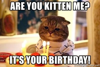 Birthday Cat - are you kitten me? it's your birthday!