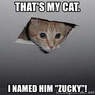 "Ceiling cat - That's my cat. I named him ""Zucky""!"
