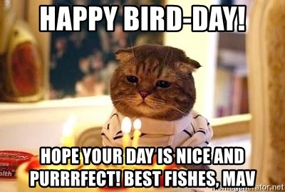 Birthday Cat - Happy bird-day! Hope your day is nice and purrrfect! Best fishes, Mav