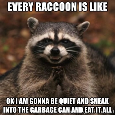 evil raccoon - every raccoon is like  ok i am gonna be quiet and sneak into the garbage can and eat it all