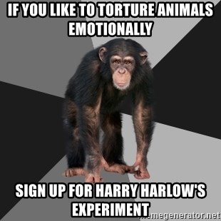 Drunken Monkey - If you like to torture animals emotionally  Sign up for harry harlow's Experiment