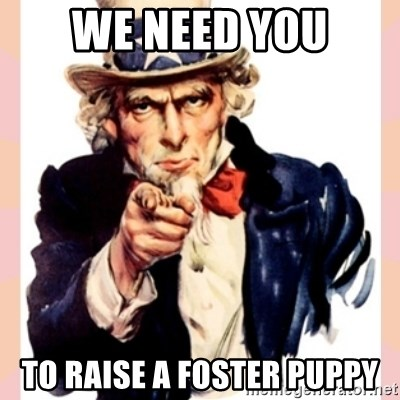 we need you - We Need You To Raise A Foster Puppy