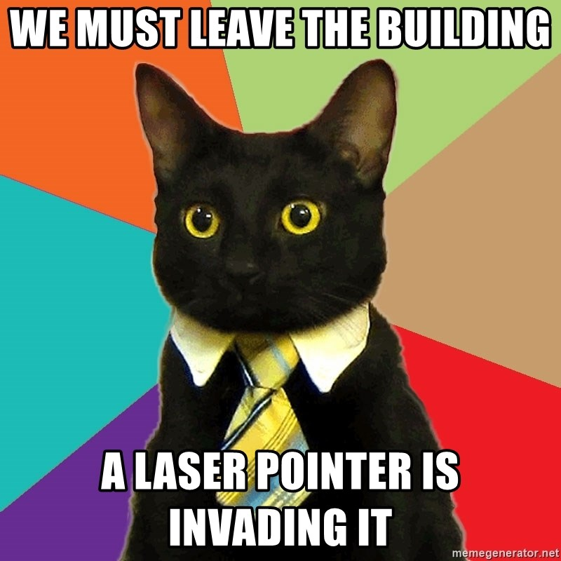 Business Cat - we must leave the building a laser pointer is invading it