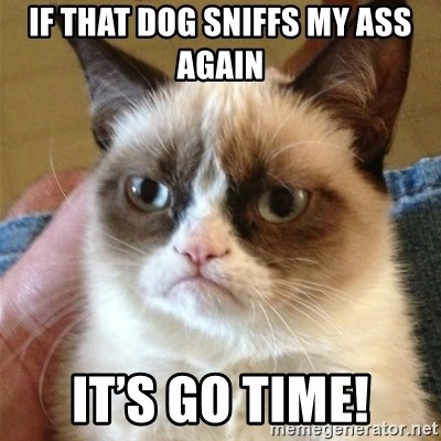 Grumpy Cat  - If that dog sniffs my ass again It's go time!