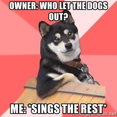 Cool Dog - Owner: who let the dogs out? Me: *sings the rest*