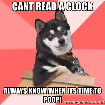 Cool Dog - cant read a clock Always know when its time to poop!