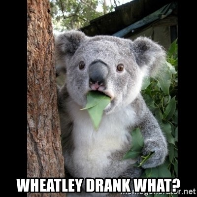 Koala can't believe it - Wheatley drank what?