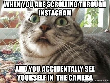 scared cat - When you are scrolling through Instagram And you accidentally see yourself in  the camera
