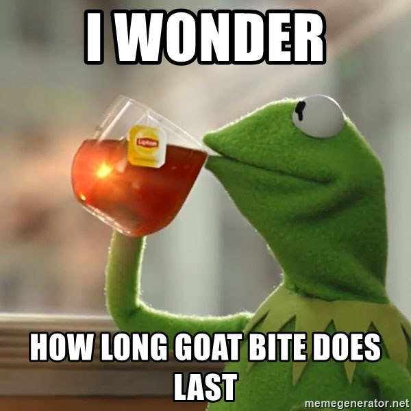 Kermit The Frog Drinking Tea - I wonder  how long goat bite does last