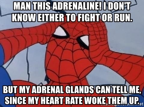 Scared Spider Dude - Man this adrenaline! I don't know either to fight or run.  But my adrenal glands can tell me, since my heart rate woke them up.