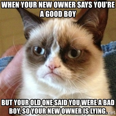 Grumpy Cat  - When your new owner says you're a good boy But your old one said you were a bad boy, so your new owner is lying.