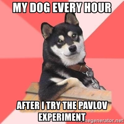 Cool Dog - My dog every hour  After I try the Pavlov experiment