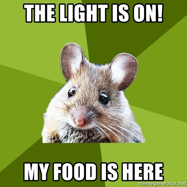 Prospective Museum Professional Mouse - The light is on! My food is here