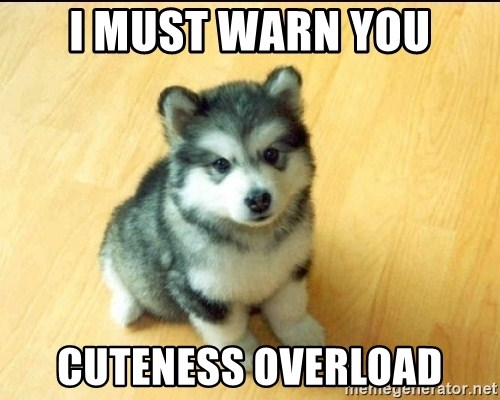 Baby Courage Wolf - i must warn you cuteness overload