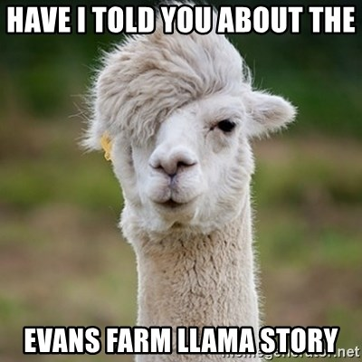 Hipster Llama - Have I told you about the  Evans Farm Llama story