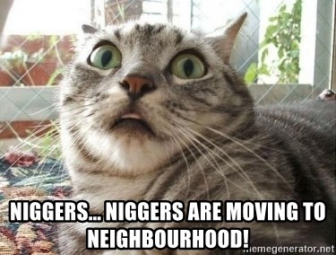 scared cat - niggers... niggers are moving to neighbourhood!