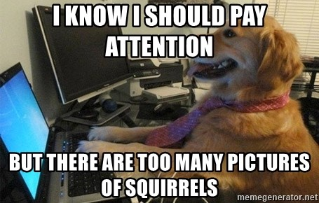 I have no idea what I'm doing - Dog with Tie - I know I should pay attention But there are too many pictures of squirrels