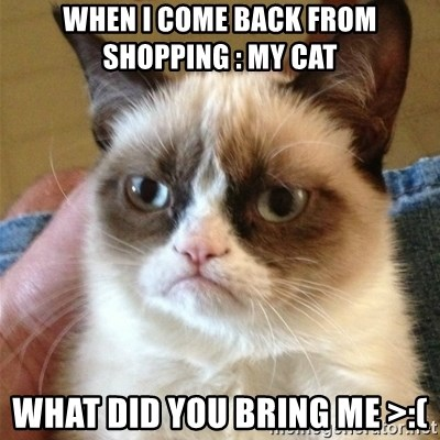 Grumpy Cat  - when i come back from shopping : My Cat  WHAT DID YOU BRING ME >:(